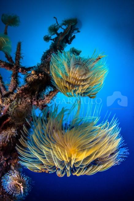 Sea_Set_Gargiulo_Marco_03-2